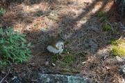 Chipmunk 2