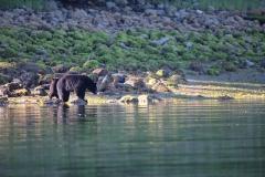 Black Bear & cub 2