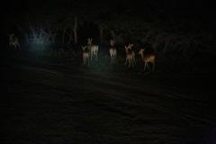 Impala 1