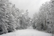 Snowy forest road 1
