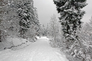 Snowy forest road 2
