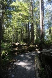 Tofino Forest