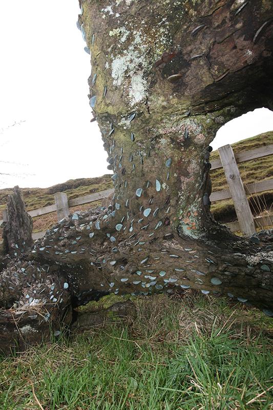 Wishing tree 2