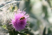 Wasp & flower